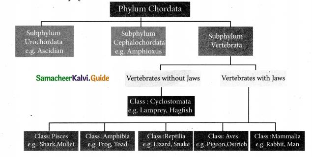 Samacheer Kalvi 9th Science Guide Chapter 17 Animal Kingdom 1