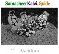 Samacheer Kalvi 9th Science Guide Chapter 17 Animal Kingdom 3