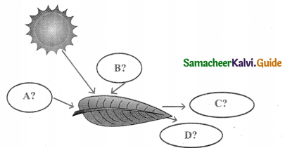 Samacheer Kalvi 9th Science Guide Chapter 19 Plant Physiology 13