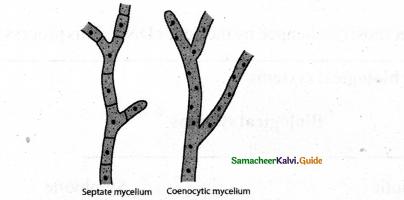 Samacheer Kalvi 11th Bio Botany Chapter 1 Living World 24