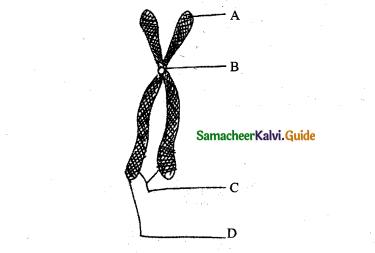 Samacheer Kalvi 11th Bio Botany Guide Chapter 8 Biomolecules 14