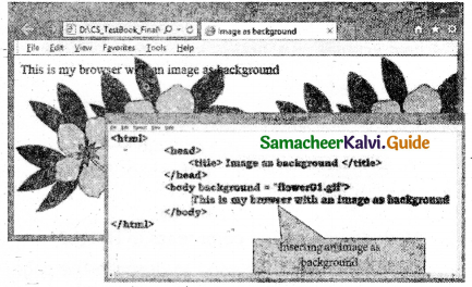 Samacheer Kalvi 11th Computer Applications Guide Chapter 10 HTML – Structural Tags 3