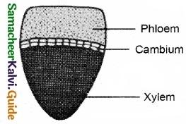 Tamil Nadu 11th Biology Model Question Paper 3 image 2