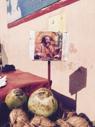 fresh coconuts in rishikesh during mooji satsang
