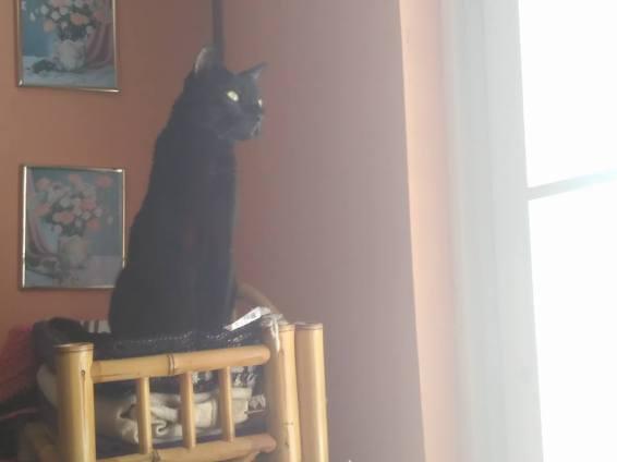 Romeo mira el patio desde un mueble alto unas semanas antes de partir. Por Yaisha Vargas (septiembre de 2016)