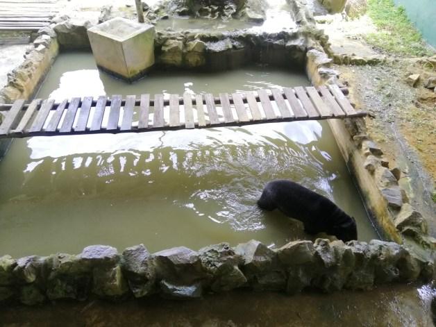 sun bear at jong's crocodile farm