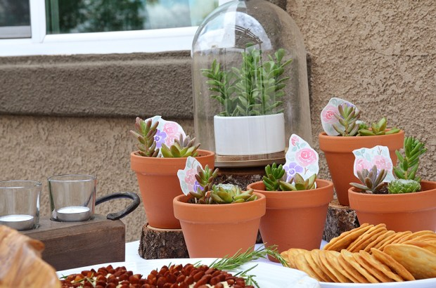 Shabby Chic Baby Shower Potted Succulent Favors