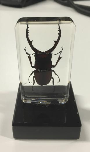 rhino bug in resin on a trophy base