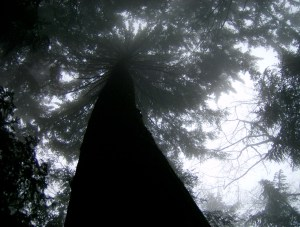 Moody tree