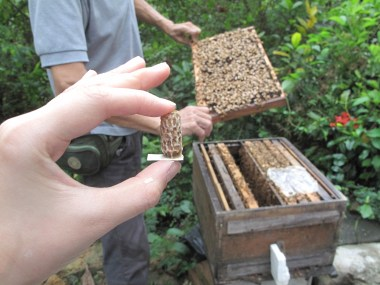 裡面的后已經被其他蜜蜂吃掉。