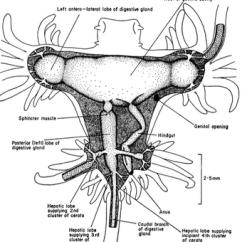 Slug Anatomy Diagram Electric House Wiring 13496 Usbdata
