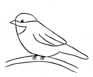 drawing step chickadee