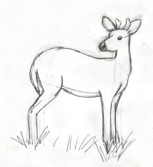 deer easy drawing pencil drawings draw buck proportion measuring head line drawn left getdrawings right lessons lesson slight changes difference