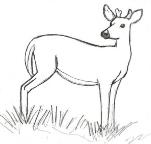 deer drawing drawings simple line draw easy proportion sketch sketches reference measuring animal steps lessons proportions using pencil realistic learn
