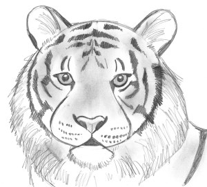 animals draw wild drawing creative animal tiger drawings sketch pencil realistic know even step don paintingvalley bear samanthasbell sample final