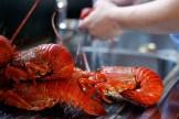 crayfish_kreef_runnybabbitcrafai