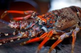 crayfish_kreef_runnybabbitcrafd