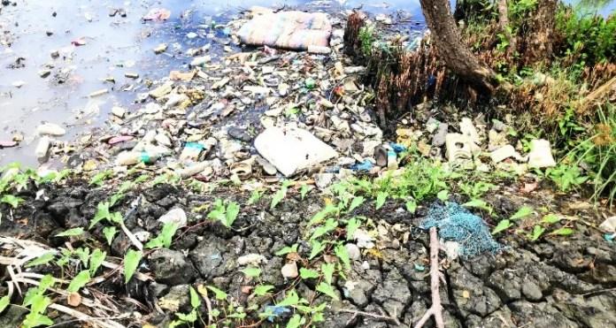 Ashtamudi backwaters severely damaged