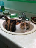 Arya lying in the bathroom sink - 10 minutes after Marelyn finished 'sparkling' it - December 2014