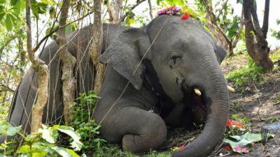 भारतमा १८ हात्तीको कोरोना परीक्षण