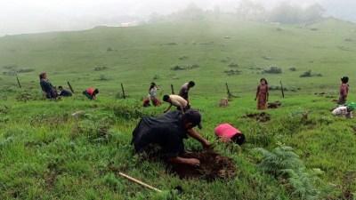 सामुदायिक वन क्षेत्रमा वृक्षरोपण
