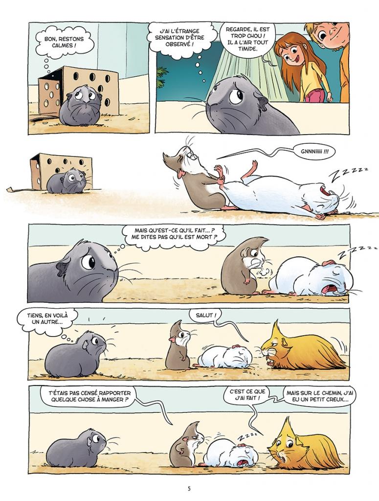 Bruit De Cochon D Inde : bruit, cochon, Cochons, Dingues, SambaBD