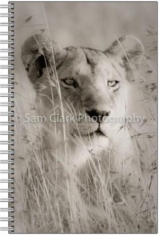 NOTE-LION