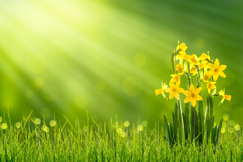 Spring Has Sprung | Berryhill Auto Care