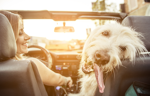On the Road with Fluffy | Tulsa Auto Care