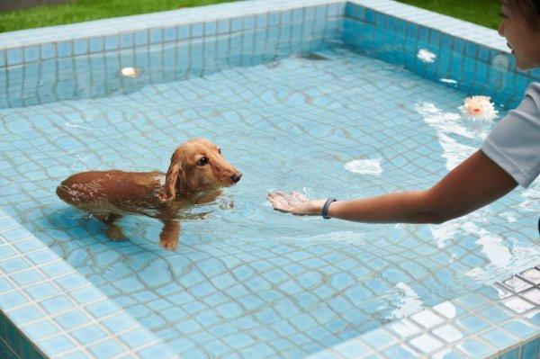 毛小孩有專屬溫泉泡湯區!礁溪寒沐新推寵物旅館 基礎沙龍+遊憩住宿一次體驗