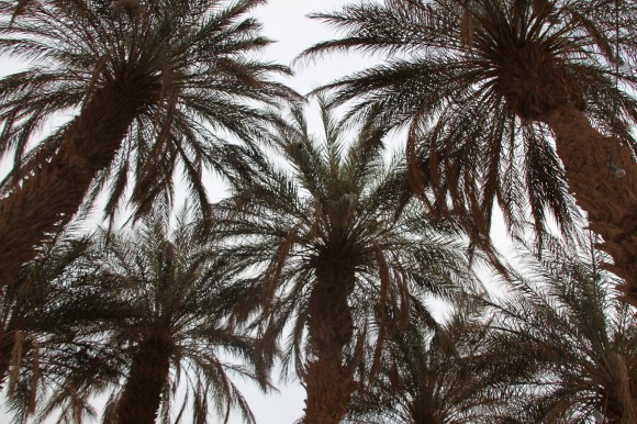 "The palm trees of ""Coco Jungle"""
