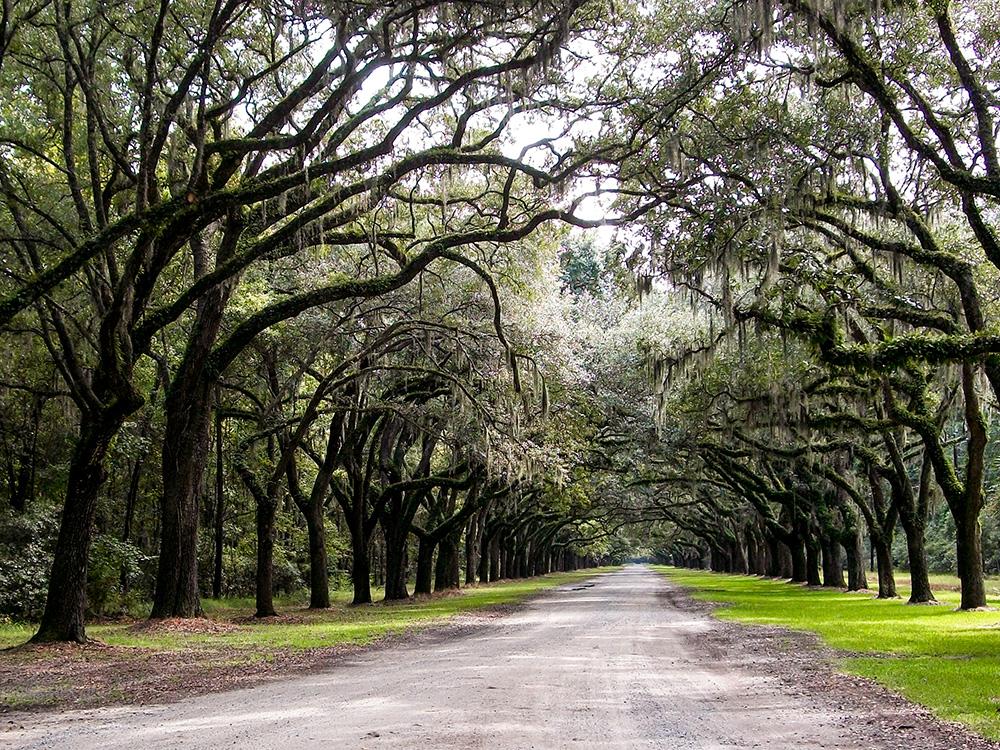 samim adventures Savannah wormsloe historic site