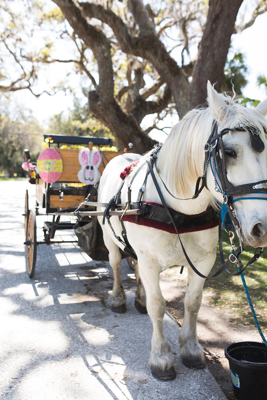 SamiM Adventures Horsing Around on Jekyll Island Three Oaks farm Golden Isles Historical Carriage Ride