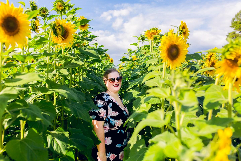 Fausett Farms Sunflower Field in Dawsonville, Georgia