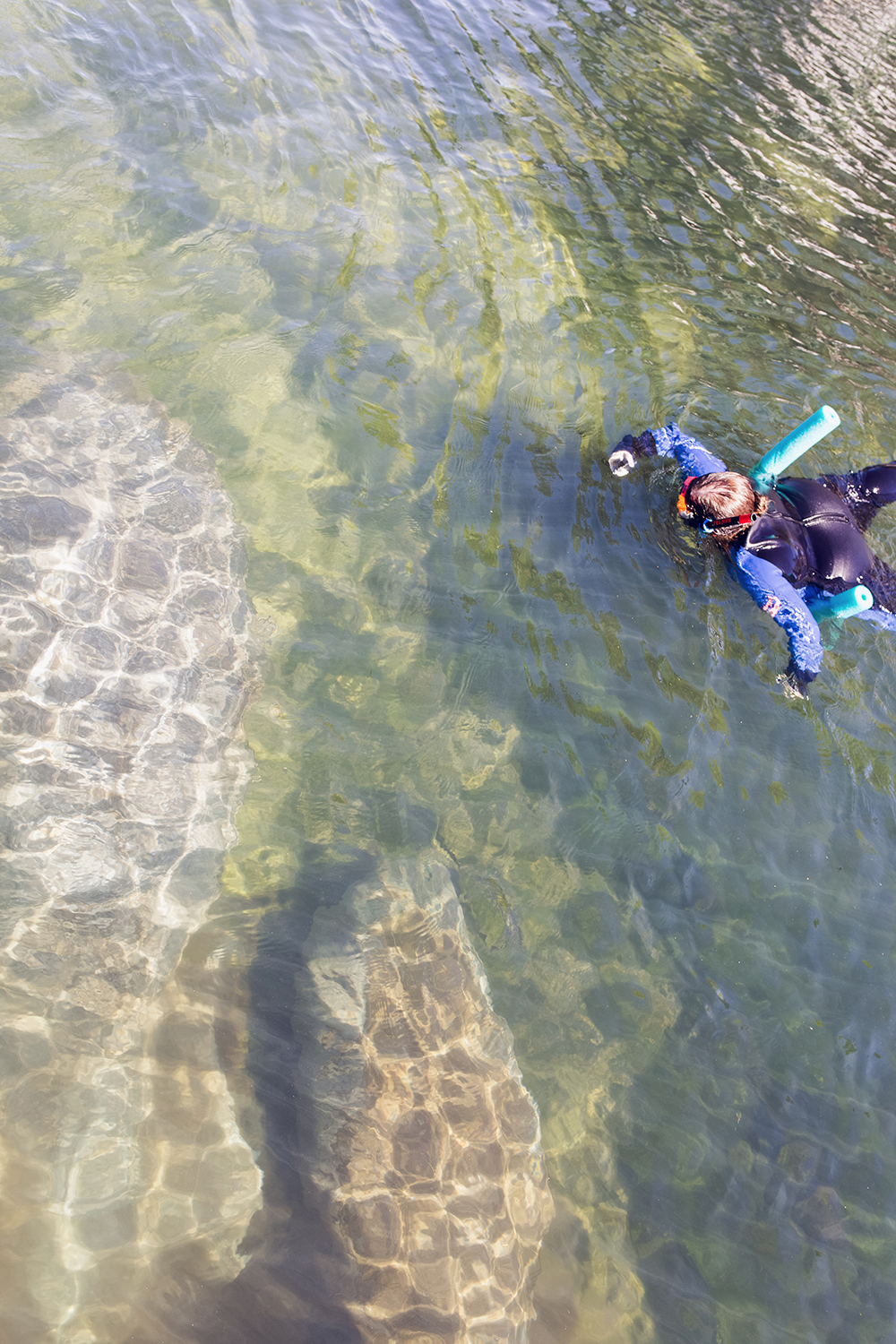 Have you ever snorkeling with the manatees in Florida? Have you ever wanted to go snorkeling with the manatees with kids? Check out my tour recap with tips on snorkeling with the manatees! #CrystalRiver #Homosassa #SnorkelingWithManatees