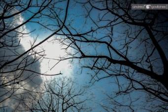Entre las ramas.
