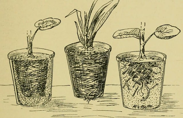 3 illustrated pot plants