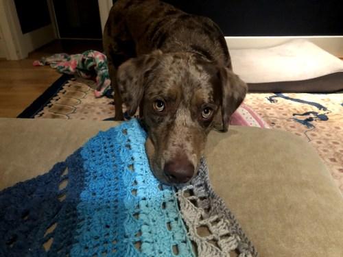 dog on solstand shawl