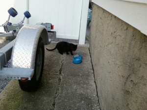 First time Feeding Sammie, trying to coax her to the backyard slowly