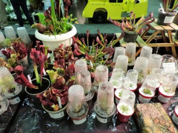 Pitcher plants & other carnivorous beauties