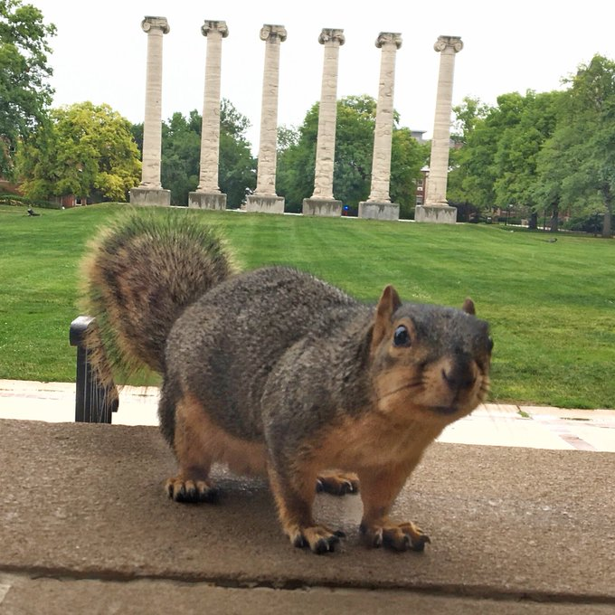 Squirrel with Quizzical Expression  on Campus