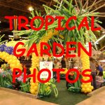 Tropical Balloon Garden Pictures