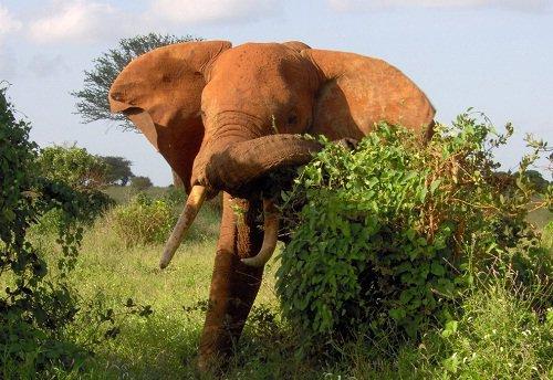 care este vederea unui elefant exerciții pentru îmbunătățirea palderii vederii