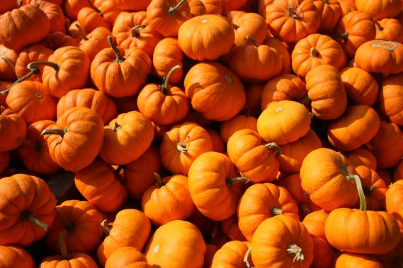 pumpkins fall concert