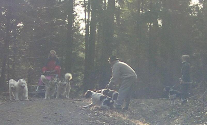 hundebegegnung-2