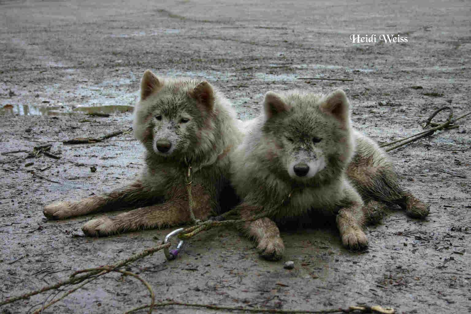 team-dogs
