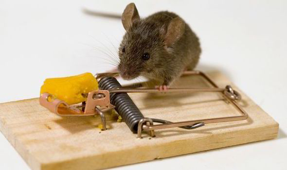 Inspirational Story – THE MOUSE TRAP