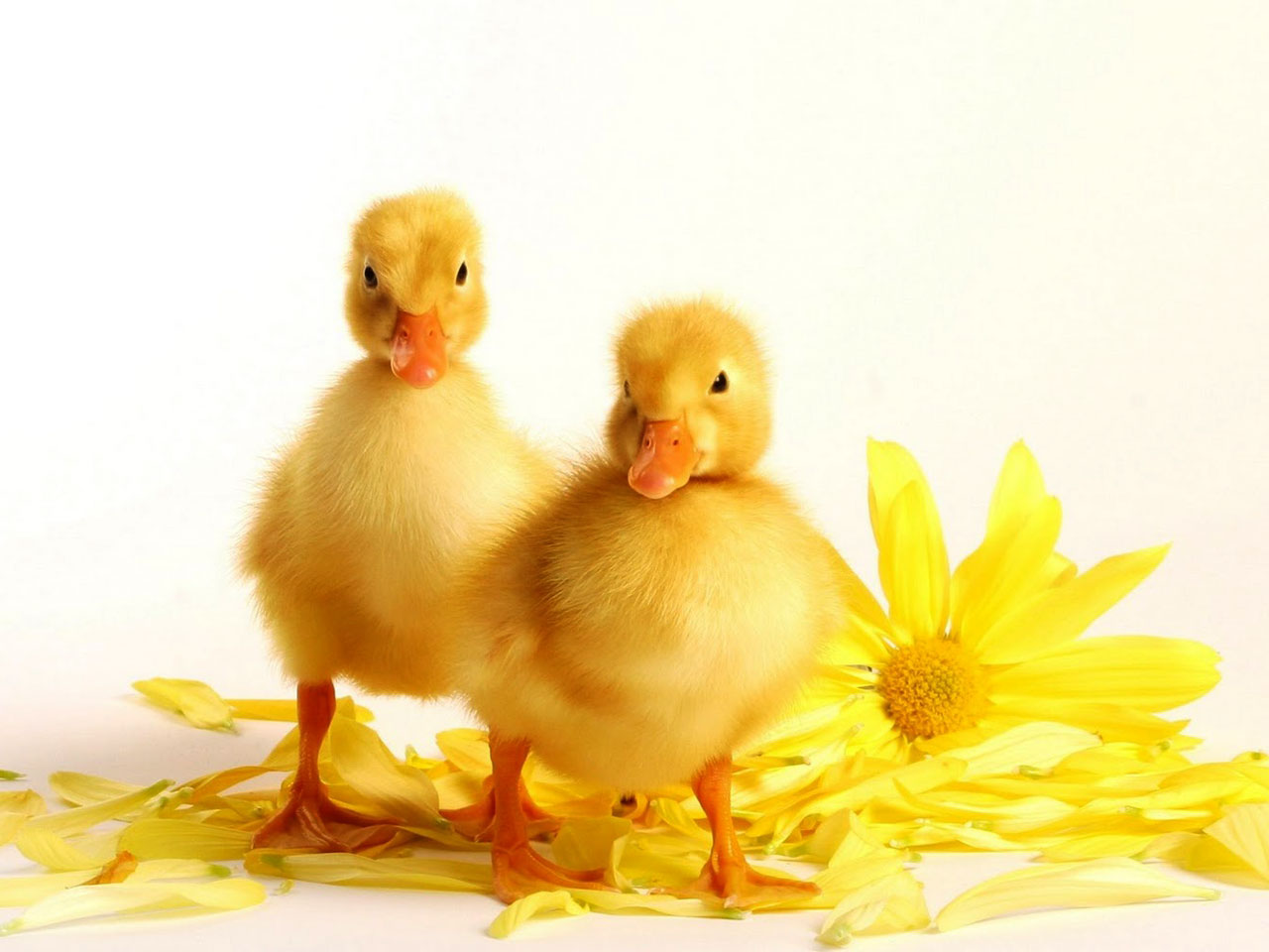 Inspirational Story – REMEMBER THE DUCK