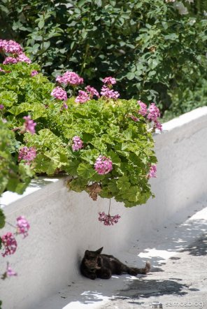 And the last monastery cat