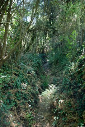 Overgrown trail